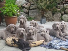 ♥♥ I want all of them!!