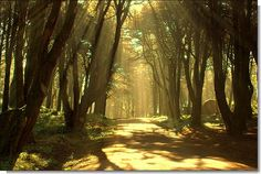 Cintra's glorious Eden   Flickr - Photo Sharing!