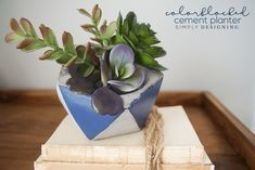 How to DIY your own Colorblocked Cement Planter to hold succulents or your favorite flowers or even trinkets or jewelry. Endless possibilities!