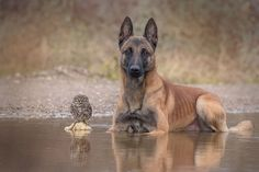 A dog and an owl became best friends and now they can't live without each other