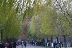 Walkway along Xihu in Hangzhou.