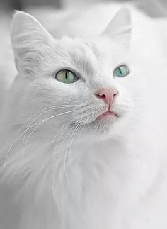 White Cat By Pavel Zilke