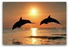 Dolphins and Law of Attraction ~ http://www.lawofattraction-resourceguide.com/2012/05/30/dolphins-and-law-of-attraction/