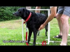 PVC Dog Washer - PVC Pipe Projects  -(Watch Video)-  Have you ever tried to wash a dog and he constantly tries to run away when the water hits him? Or you wish you had a third hand to hold the water hose? Well here is a great way to wash your dog quickly outside.  This is an easy to build PVC Dog Washer. PVC Life Hack Featured on Lifehacker homemade diy  www.specificlove.com