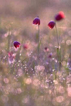 by Sergii Markov Beautiful Flowers Wallpapers, Beautiful Nature Wallpaper, Flower Pictures, Pretty Pictures, Pretty Flowers, Wild Flowers, Flower Aesthetic, Jolie Photo, Flower Wallpaper