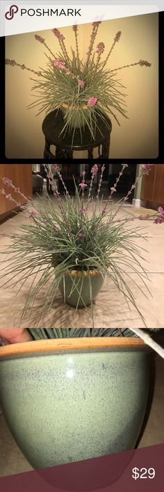 Decorative Plant Pink/Purple color flower with green frosted grass in a green terra-cotta pot. Perfect to display indoors to add charm to your home. Accessories