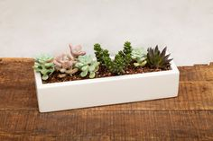 """From Auré Aura: Concrete Planter - 13"""" White This refined concrete planter is handmade and offers a warm signature look throughout."""