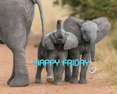 Its Friday Quotes, Friday Humor, Happy Friday Pictures, Morning Pictures, Morning Pics, Good Morning Friday, Days Of Week, Funny Good Morning Quotes, Have A Great Day