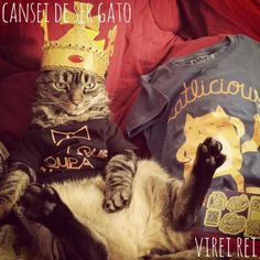 """5 bichos de estimação que pararam a internet - Gato Chico, mais conhecido pela frase """"Cansei de ser gato..."""""""