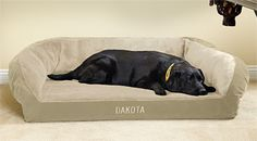 Memory foam dog bed for Lucy - Orvis