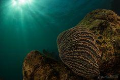 Primeras Fotografías bajo el agua