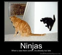 ninja cat funny humor - This is what my black kitten does to my orange cat