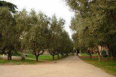 Jardim de Oliveiras