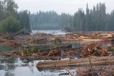 Water ban in place following tailings pond breach at Mount Polley Mine near Likely, BC