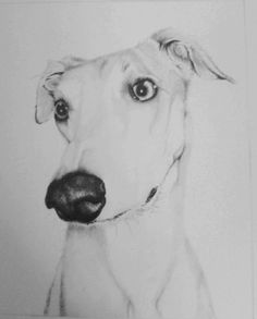 """Drawing by Sarah J. Lurcher """"Bailey"""""""