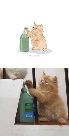 Kittens Cutest, Cute Cats, Funny Cats, Funny Animals, Cute Animals, Gato Gif, Cute Cat Wallpaper, Watercolor Cat, Kittens And Puppies