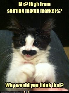 I don't usually like cat pictures but this made me laugh!
