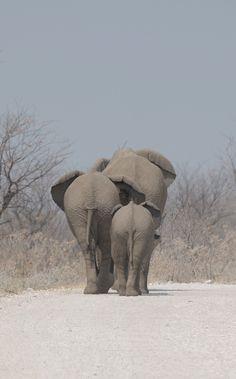 Elephants - Etosha by Anne