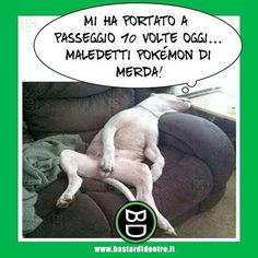 Due piccioni con un #pokémon #bastardidentro #cane #ipnoticamentebastardidentro www.bastardidentro.it Pokemon Go, Funny Pictures Can't Stop Laughing, Hai, Cheer Up, Emotional Intelligence, Funny Pins, Good Mood, Funny Moments, Funny Cute