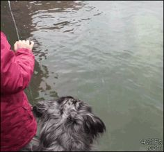 What do you expect will happen in this GIF?>> OH MY WORD I SWEAR THEY WERE IN A BOAT AND THEN OUT OF NO WHERE A POLAR BEAR JUMPS UP. I LAUGHED SO HARD. THAT LITERALLY MADE MY DAY.