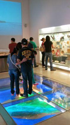 Gallery view Environmental Design, Design Museum, Maya, Display, Spaces, Album, Explore, Gallery, Nature