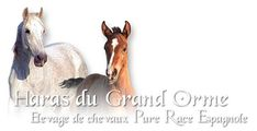 Élevage de chevaux Pure Race Espagnole de couleur grise et noire. Situé au centre de la France à Arcomps dans le Cher, notre élevage de taille humaine associe amour des chevaux ibériques et travail de qualité. Rooster, Centre, Racing, France, Pure Products, Animals, Gray Color, Love, Human Height
