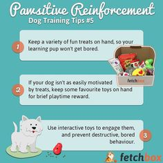 Pawsitive Reinforcement Training Tips Teaching is hard! Psychology Research, Dog Health Tips, Educational Psychology, Kitten Care, Interactive Toys, Dog Care Tips, Enjoying The Sun, Getting Bored, Dog Training Tips