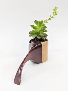 Bloodwood and Maple Wooden Sculptural Succulent Planter by Ericksen Design Plant Box, Indoor Planters, Succulents, Plants, Design, Indoor Window Boxes, Succulent Plants, Plant