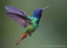 Hummingbirds | Laughter is the best medicine
