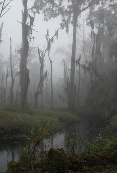Dark swamp. Anything can be lurking in the fog...