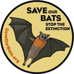 Save Our Bats website (bat crisis: white-nose syndrome killing bats across parts of North America)