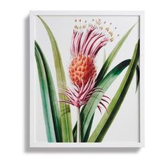 L'ananas Pingouin Print From The New York Botanical Garden Archives (£230) ❤ liked on Polyvore featuring home, home decor, wall art, framed wall art, garden home decor, new york wall art, bird home decor and bird wall art