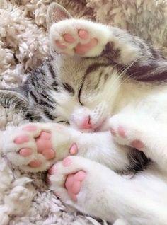 13 Fantastiche Immagini Su Zampe Di Gatto I Love Cats Pets E