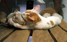 わしゃちと眠いんじけどな〜   「種は違うけれども仲良しな動物たち」
