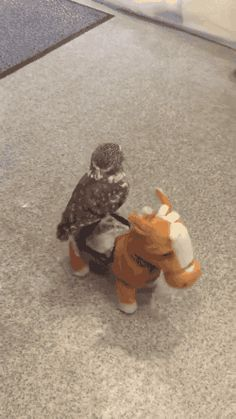 Because sometimes what you need most is a video of a little owl named Momo-chan living out their dreams of being a cowboy riding a horse on the open carpet range. Ride 'em cowboy![via Neatorama and RocketNew24]