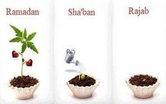 The Rajab Training Program