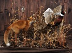 Tietz Taxidermy and Wildlife Art Lebanon WI Taxidermy Fox, Taxidermy Decor, Taxidermy Display, Deer Hunting Decor, Deer Hunting Tips, Bow Hunting, Hunting Art, Hunting Stuff, Pheasant Mounts