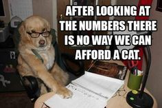 Vitamin-Ha – Best of Financial Dog Meme (15 Pics)