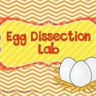 freebie! This is an egg dissection lab that I do with my students during our farm unit when we incubate eggs. We compare/contrast our incubated eggs with eg...