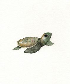 ACEO Baby Loggerhead Turtle / watercolor print / by kellybermudez, $5.00