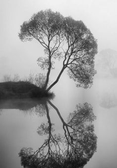 Ansel Adams | B & W The reflection of this piece is very cool and the black and white color scheme really adds a bit of a neat factor. The way the tree is designed and the details of it are also pretty and add to the whole picture
