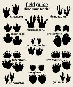 Dinosaur Tracks Poster, Field Guide Series Dinosaur Nursery Art, Field Guide to Dinosaur Tracks Dinosaurs Preschool, Dinosaur Activities, Dinosaur Worksheets, Preschool Crafts, Dinosaur Bedroom, Boys Dinosaur Room, Dinosaur Room Decor, Dinosaur Projects, Dinosaur Tracks
