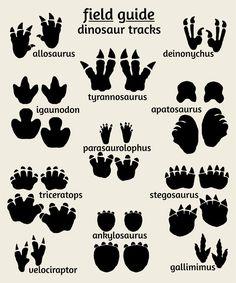 Tipos de huellas de dinosaurios #huellas #dinosaurios