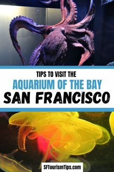 Learn all about the interesting animals that call the San Francisco Bay home at the Aquarium of the Bay. This Fisherman's Wharf aquarium is a must see for kids of all ages. #sanfranciscoattractions #sanfranciscowithkids #familyfriendlysanfrancisco San Francisco With Kids, San Francisco Travel, San Francisco Bay, San Francisco Attractions, San Francisco Neighborhoods, California City, California Vacation, Fisherman's Wharf, Interesting Animals