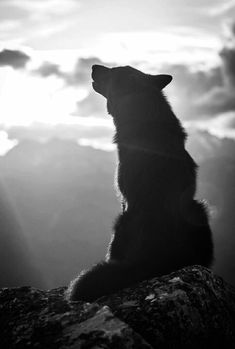 Howling wolf - black and white animal photography pictures / photos Wolf Love, Wolf Spirit, My Spirit Animal, Beautiful Creatures, Animals Beautiful, Tier Wolf, Animals And Pets, Cute Animals, Beautiful Wolves