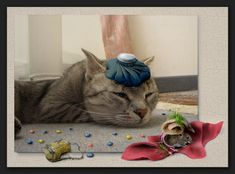 the day after The Day After, Photo Manipulation, My Photos, Pets, Animals, Happy New Year Wishes, Cool Pictures, Cats, Animales