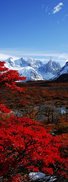 The world's a beautiful place✯ Cerro Torre and autumn leaves, Parque Nacional Los Glaciers, Patagonia, Argentina Places Around The World, Oh The Places You'll Go, Places To Travel, Around The Worlds, Travel Destinations, Travel Tips, Travel Hacks, Holiday Destinations, Beautiful World