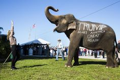Landon Nordeman for TIME: Donald Trump supporters parade an elephant in front of a rally in Sarasota, Fla.   https://timedotcom.files.wordpress.com/2015/12/time-person-of-the-year-time-person-of-the-year-donald-trump-001.jpg?quality=75&strip=color&w=838