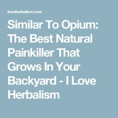 Similar To Opium: The Best Natural Painkiller That Grows In Your Backyard - I Love Herbalism