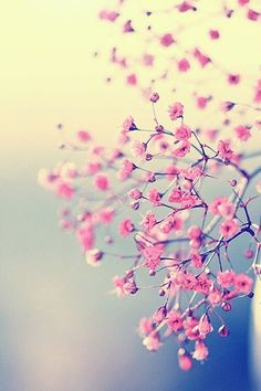 Pink blossom; this print and this color palette for baby girl's room
